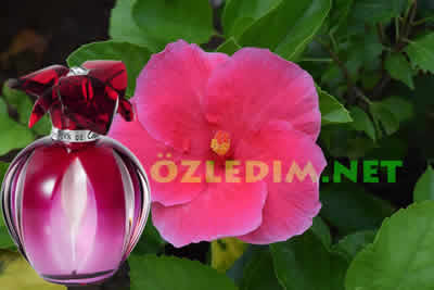 akrep burcu için amber çiçeği ve kokusu