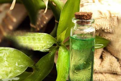 tırnak mantarı tedavisi için çay ağacı yağı