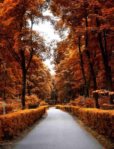 autumn sonbahar resimleri