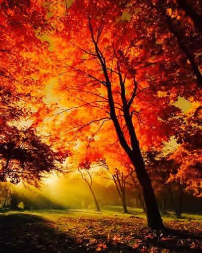 sonbahar renkleri kızıl güzellik